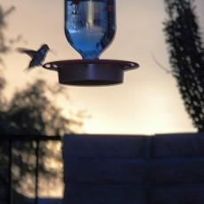 Hummingbird.at.feeder
