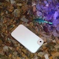 Scorpin.iPhone