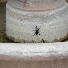 Stink Bug Fountain